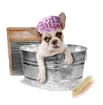 Pet Shampoo for Dogs